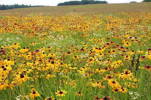 Flowers Gone Wild by Randy  Shellenbarger