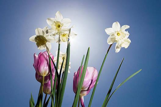 Flowers in Sun light by Trevor Wintle
