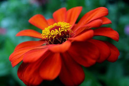Flowers Inside a Flower by David M Jones