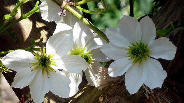 Flowers IV by Mark L Watson