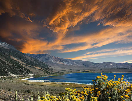 Randall Branham - flowers lake mountains sky