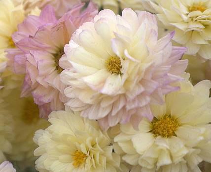 Flowers by Michael Dohnalek