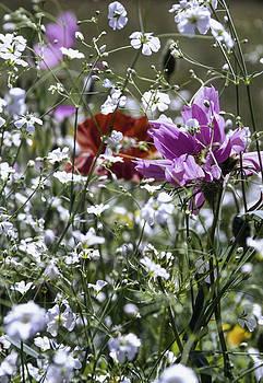 Flowers of summer by Patrick Kessler
