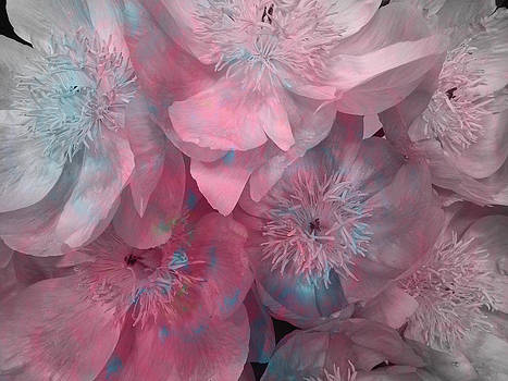 Flowers - Pinks and Blues by Louise Grant