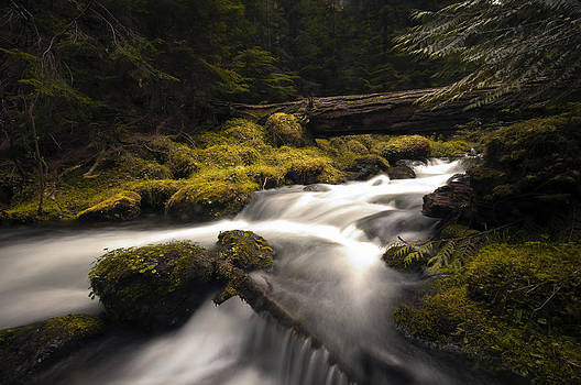 Flowing Waters - Olympic National Park by Kevin Pate