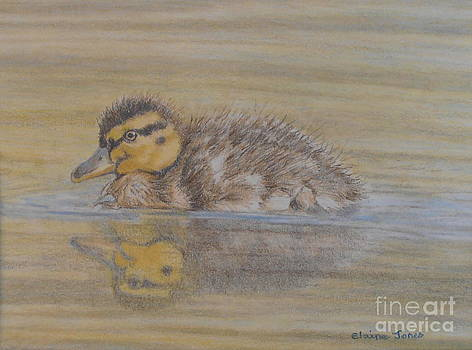Fluffy Duckling by Elaine Jones