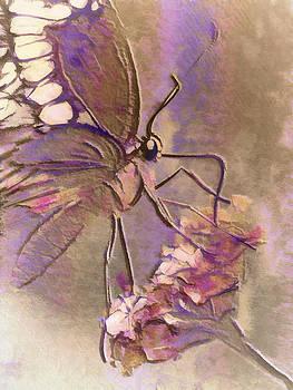 Fluorescent Butterfly by Jill Balsam