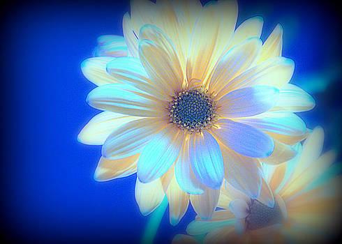 Fluorescent Flower by Shayne Johnson Fleming