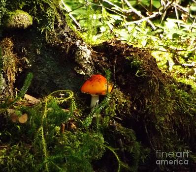 Fly Agaric mushroom on Forest Floor by Brigitte Emme