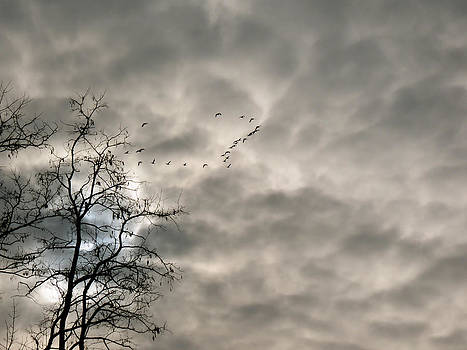 Fly By by Azthet Photography