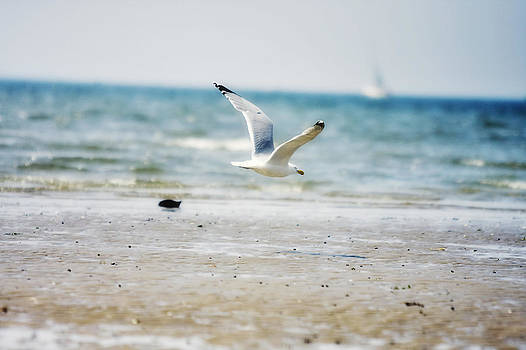 Fly By by Boris Blyumberg
