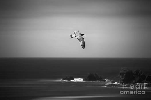 Svetlana Sewell - Fly High