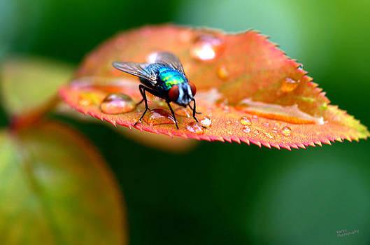 Fly by Karen Kersey