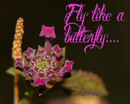 Fly like a butterfly by Old Pueblo Photography