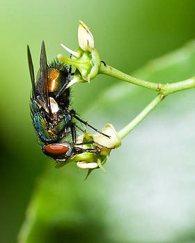 Fly Macro by Jaci Harmsen