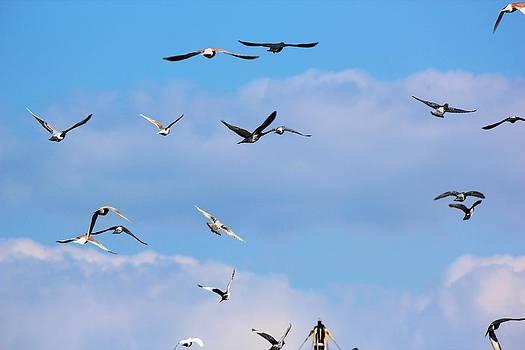 Fly with me. by Cigdem Cigdem