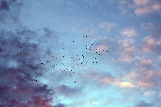 Flying birds at sunset by Eremia Catalin