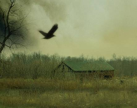 Gothicolors Donna Snyder - Flying For Cover
