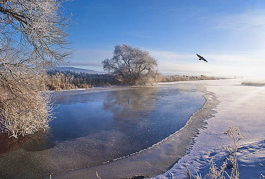 Flying Free on a Winter's Day by Abram House