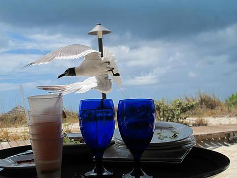 Flying Seagull   by Carmine Arcaro