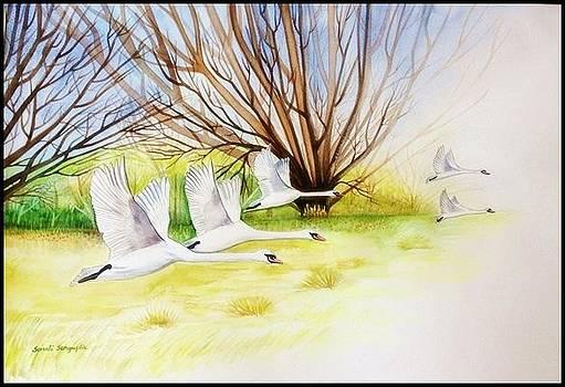 Flying Swans by Sonali Sengupta