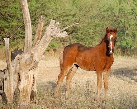 Foal and Free by Jill Moran