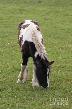 Foal by Carol Lynch