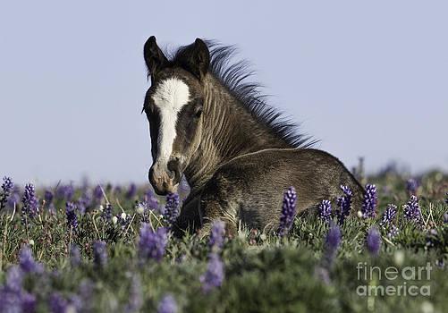 Foal in the Flowers by Carol Walker