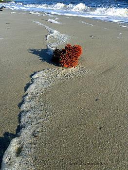 Foam and seaweed on the beach by Allen Beilschmidt