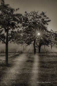 Fog and Shadow by Sheen Watkins