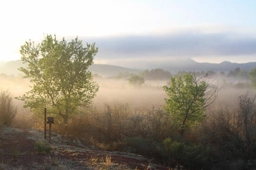 Fog in Riverbed by Sharon I Williams