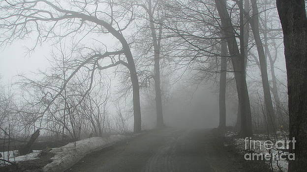 Fog by Laura Chorba