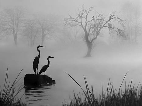 Nina Bradica - Fog on the Lake