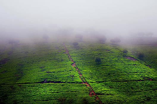 Jenny Rainbow - Fog over Tea Plantations. Sri Lanka