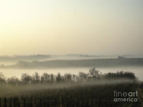 Patricia Hofmeester - Fog over vineyards