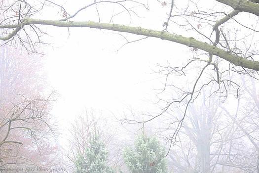 Fog by Stacie  Goodloe