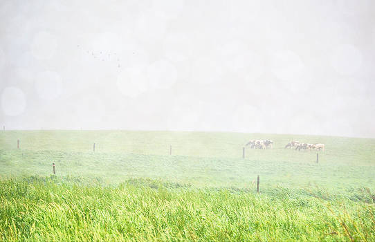 Emily Stauring - Foggy Breakfast