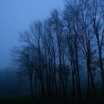 Foggy Forest by Amanda Edwards