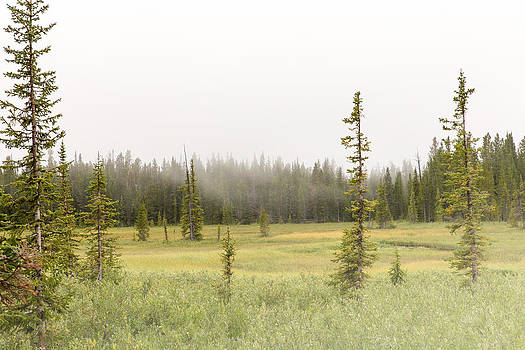 Foggy Meadow Park County Wyoming by Troy Montemayor