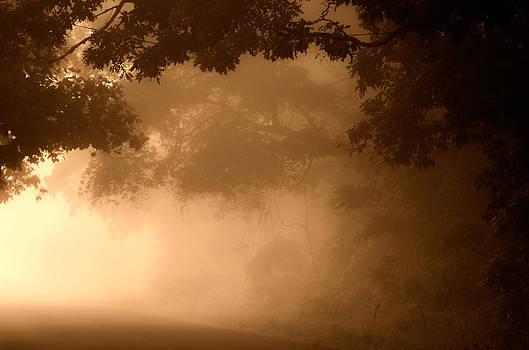 Foggy Morning by Roxanna Coeling