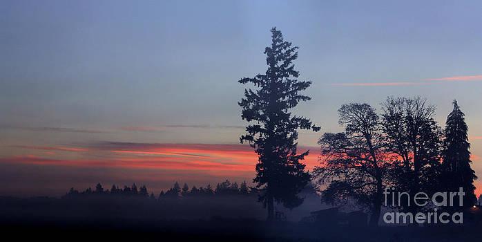 Nick Gustafson - Foggy Morning Sunrise