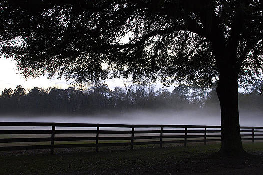 Foggy Pasture by Kathy Ponce