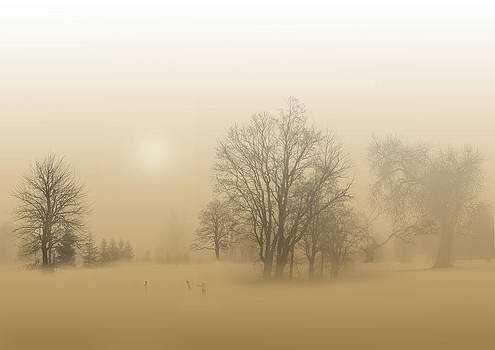 Foggy Play by Jordan Browning