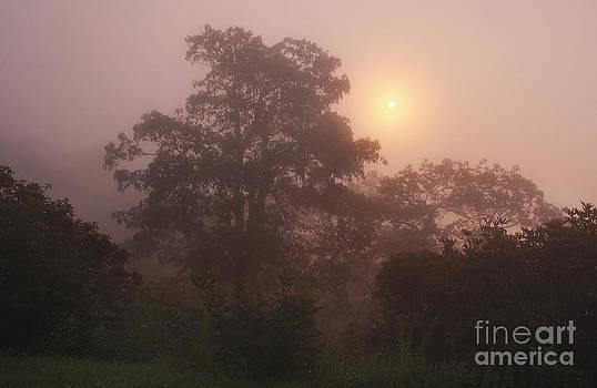 Jonathan Welch - Foggy Sunrise