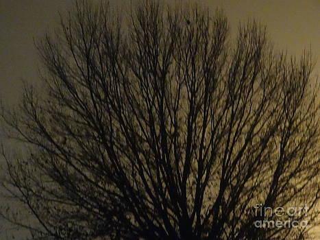 Foggy Tree by Joseph Baril