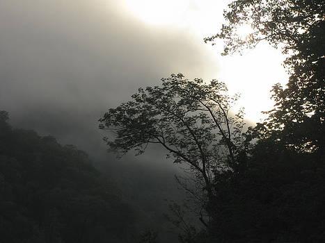 Foggy Valley Overlook by Shane Brumfield