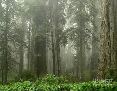 Foggy Walk by Tiffany Rantanen