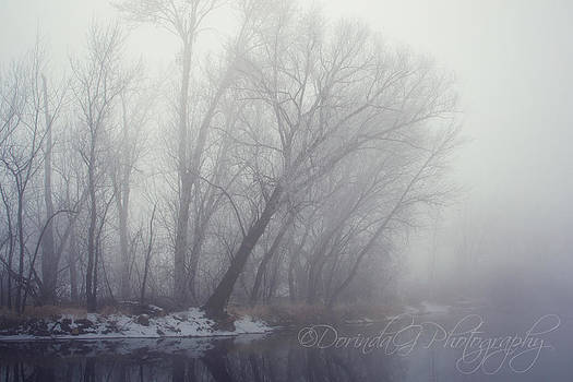 Foggy Winter Morning by Dorinda Grever