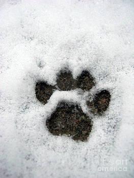 Footprint series. Cat by Ausra Huntington nee Paulauskaite