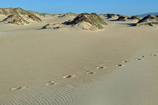 Footprints in the Dunes by Bruce Gourley